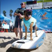 Surf City Surf Dog Contest