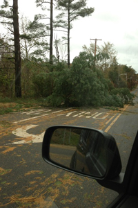 Trees down near Jackson.
