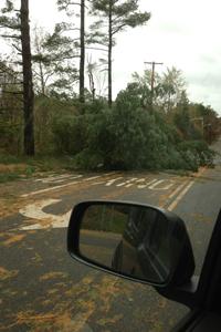 Trees down near Jackson.