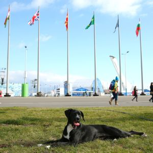 Stray dogs were a constant fixture in Sochi, as a handful of athletes made a commitment to adopt some of the animals.