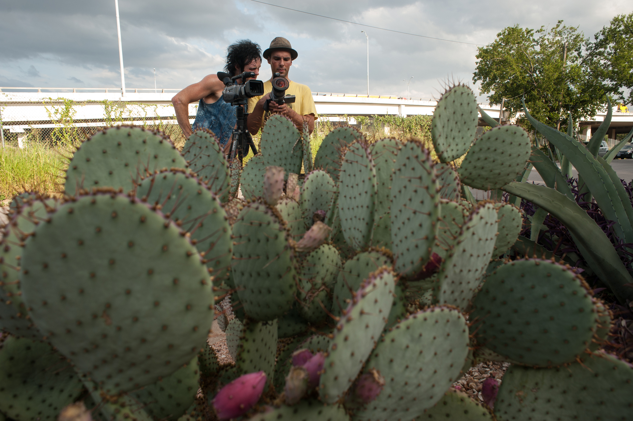 Cacti filming