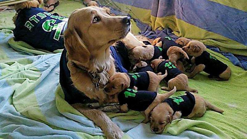 Seahawks Dogs