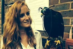 Wimbledon Hawk Rufus, and handler