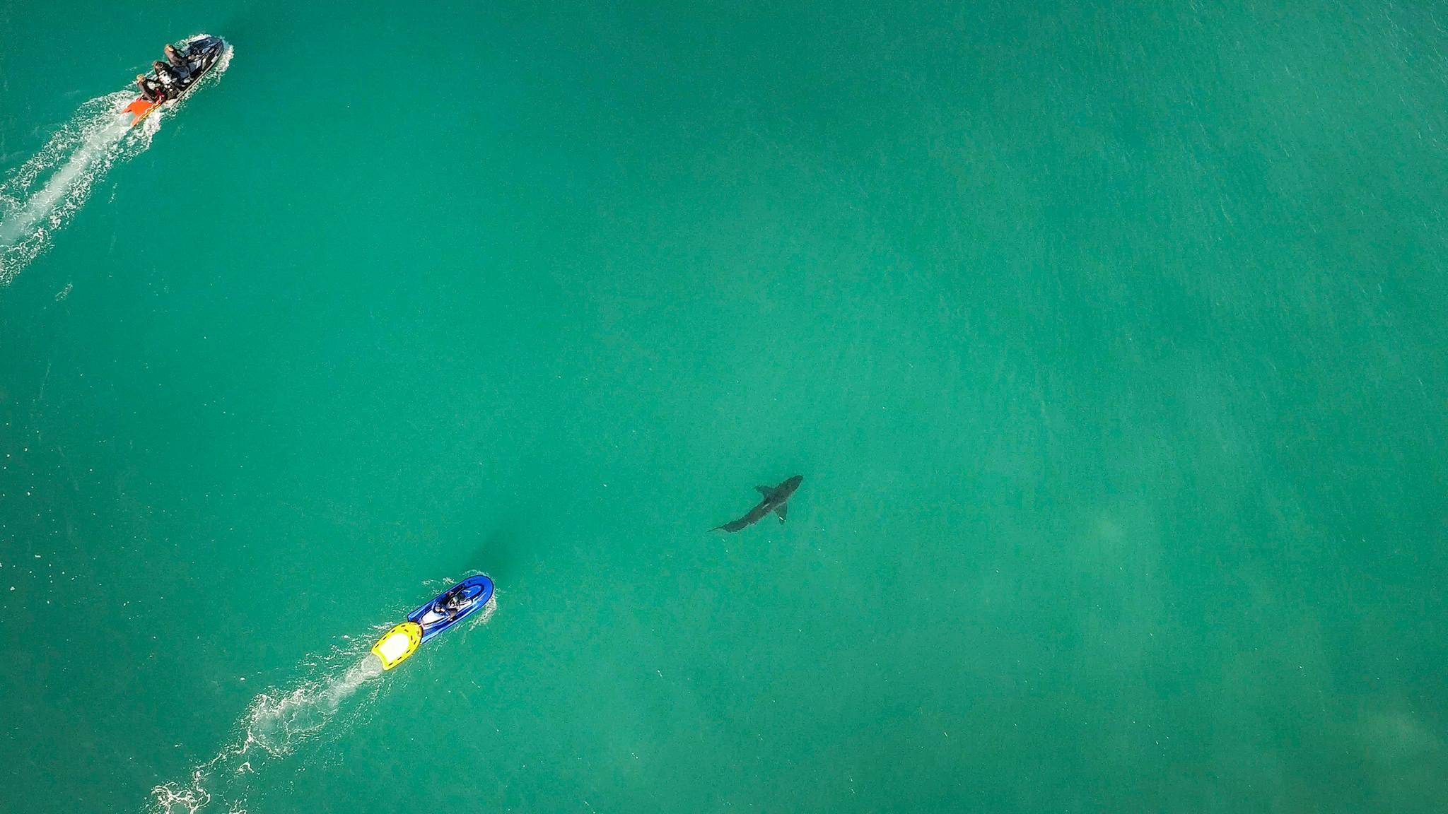 Shark delay