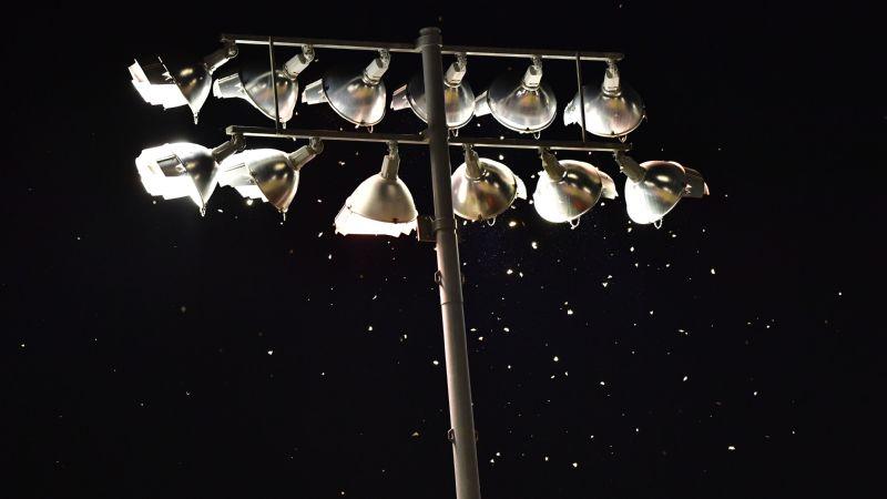 WCWS moths